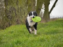 A kutyafrizbi egy jó játék